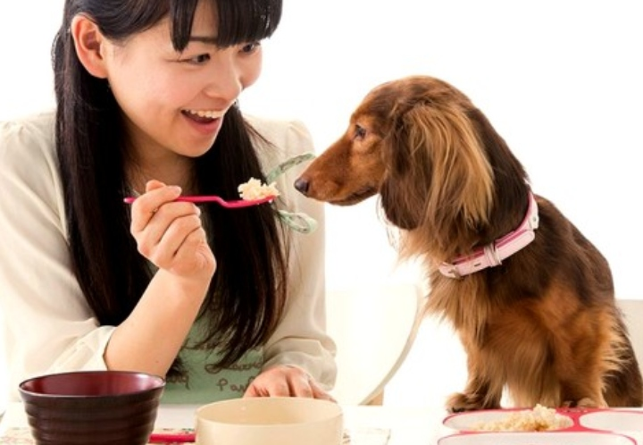 Pet Food Trends, Chinese Style