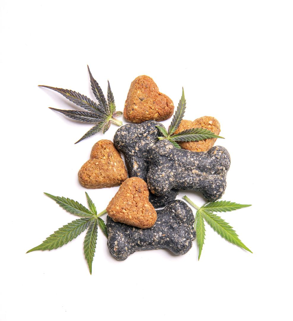 Cannabis for Pets? Recent Studies and What's Comming!