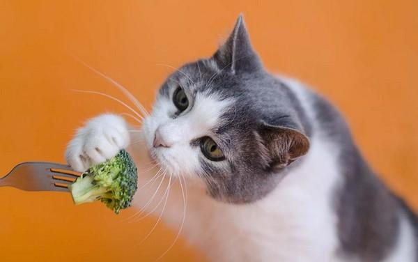 What Cat Owners Want in Natural Foods