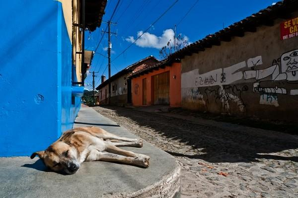 COVID-19's indirect Impact on Pet Food in Latin America