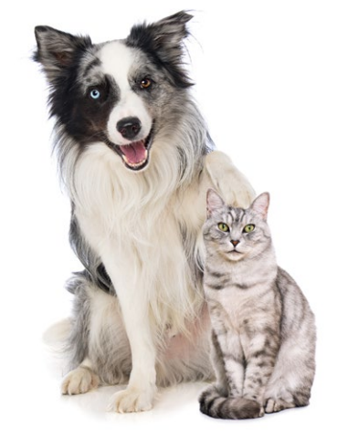 What is the Relationship between Pet Food and the hair of Cats and Dogs?
