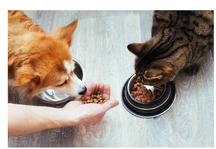 Packaged Facts predicts top 5 trends for Pet Food
