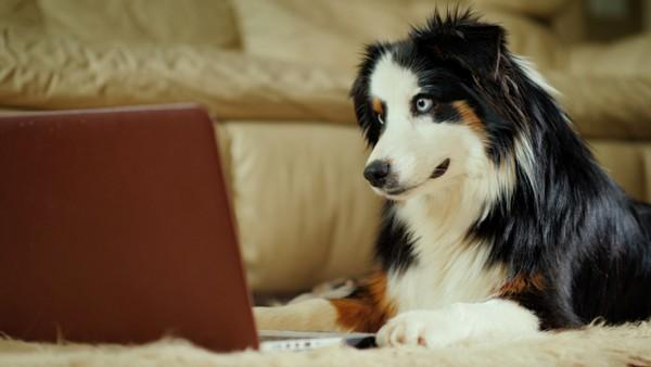 Pet Technology: Totally amazing or Too Much?