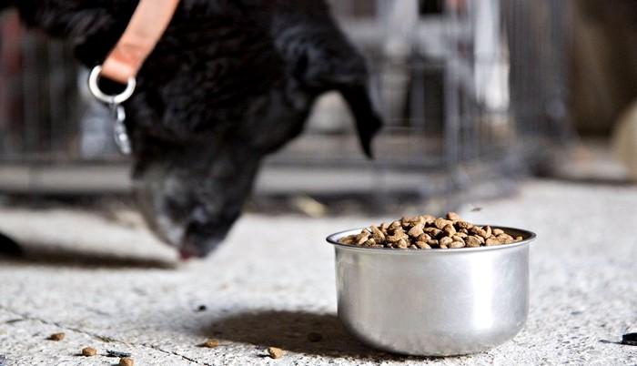 The Premiumization of Pet Food: A Growing Trend in our Industry