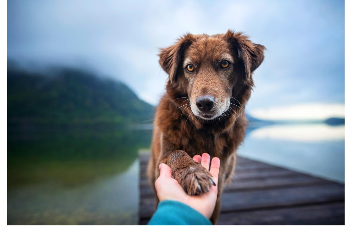Breakthrough for pet health and sustainability - Veramaris announces a richer, sustainable algae Omega-3 for pets