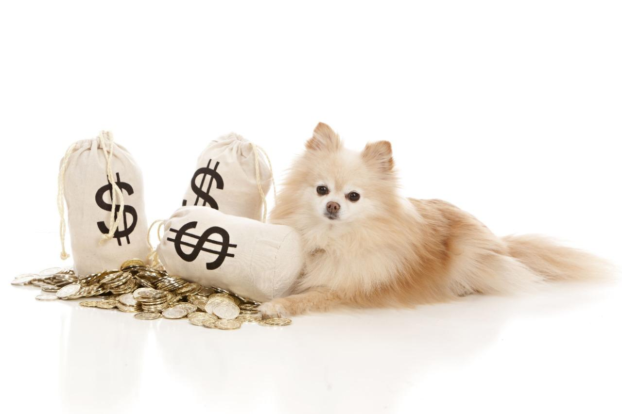 Pets: investment or opportunity?