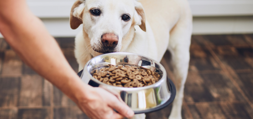 What is the difference between Pet Food?